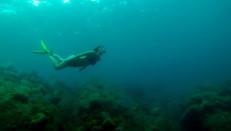 Orlando Amador y cortesía Titan Dive Center